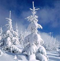 Wintertraum. von li-lu