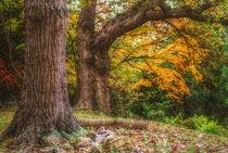 Trip To Autumn von CHRISTINE LAKE
