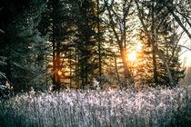 Sonnenuntergang an der Isar von Andreas Brauner