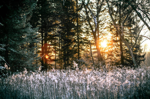 Isar-im-winter-16906589057-o