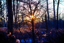 Sonnenuntergang an der Isar by Andreas Brauner