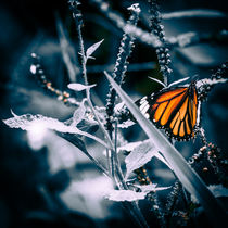 Monarch by mroppx