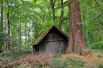 Hütte im Wald Naturpark Schönbuch von Matthias Hauser