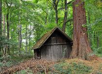 Hütte im Wald Naturpark Schönbuch Deutschland von Matthias Hauser