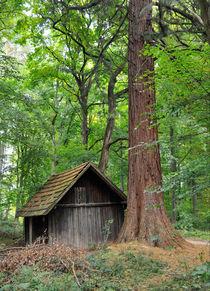 Hütte und Mammutbaum Naturpark Schönbuch von Matthias Hauser