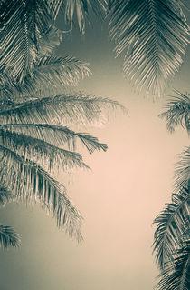 Palmblätter BW von mroppx
