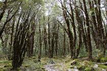 Wood by timberworld