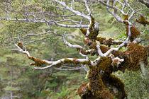 Im Alter by timberworld
