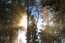 Leuchtende Baumkronen von Bernhard Kaiser