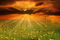 Sonnenuntergang über Wiese von darlya