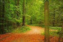 im Wald by Bernhard Kosten