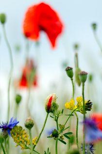 Blumentraum von Katja Bartz