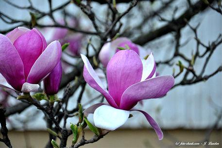 Blumen-1