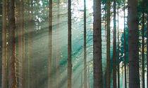 Ein lichter Moment by Bernhard Kaiser