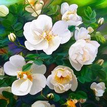 Wild Roses von Ilgvars Rauda