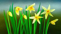 Narcissus von Ilgvars Rauda