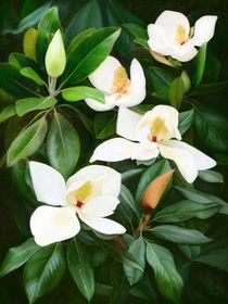 Magnolia by Ilgvars Rauda