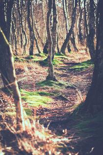 Birken im Moor von Peter Eggermann