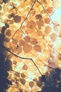 Blätter in herbstlichen Farben by Peter Eggermann
