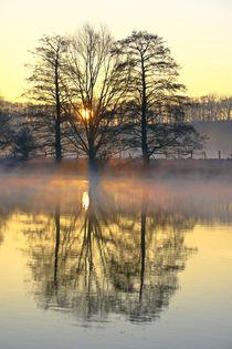 Bäume am Flussufer von Bernhard Kaiser