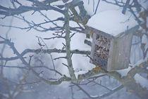 the birds are gone... 2 von loewenherz-artwork