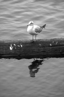 Seagull II by uta-behnfeld