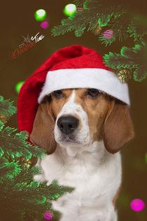 Christmas Time / 12 von Heidi Bollich