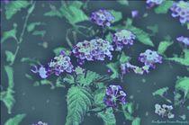 Mosaic Butterfly Blooms von Dan Richards