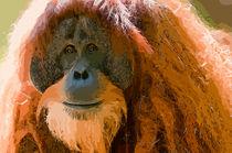 Mature-male-orangutancom