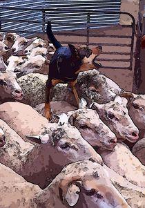 Sheep dog von Andrew Michael