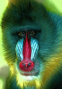 Mandrill by Andrew Michael