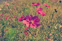 Blumenwiese-2015-10-011-d-6000