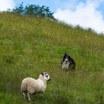 Dog and Sheep von Andrew Michael