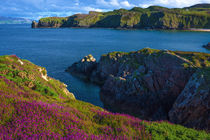 Fanad Head flowers by Andrew Michael