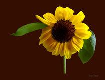 Golden Sunflower von Susan Savad
