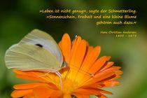 Kohlweißling auf Ringelblume von Annette Freudling
