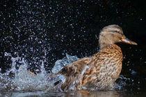 Badespaß von Annette Freudling