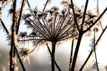 WINTER-IMPRESSION by Beate Radziejewski