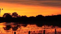 Afternon the Pantanal  von Klauss Milhorati Neves