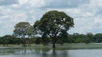 Pantanal Matogrossense von Klauss Milhorati Neves
