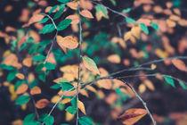 Herbstlaub von Ruby Lindholm