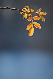 'Englischer Garten... 75' von loewenherz-artwork
