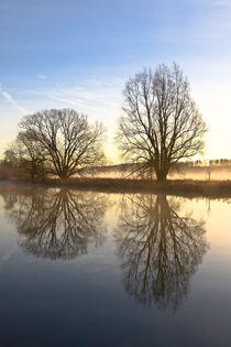 Bäume, Fluss und Nebel von Bernhard Kaiser