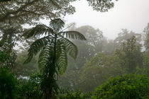The Big Green at Rain Forest von Norbert Probst