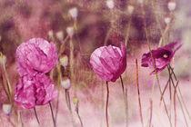 Pink Poppy 2 von Sonja Losberg
