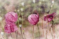 Pink Poppy 1 von Sonja Losberg
