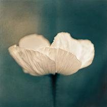 Shining by Josephine Mayer-Hartmann