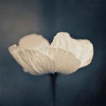 Nachtblau by Josephine Mayer-Hartmann