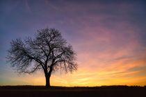 Baum vor Abendhimmel von Bruno Schmidiger