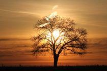 Goldener Baum von Bruno Schmidiger